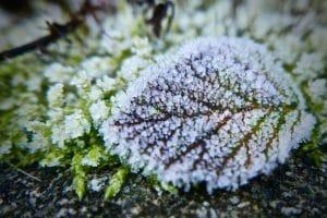 Jak przygotować ogród na nadejście zimy